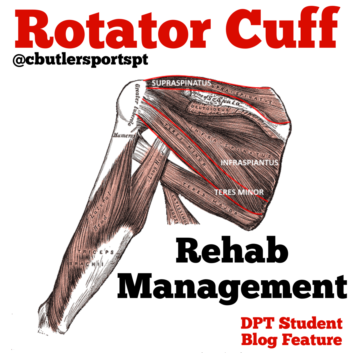 Rotator Cuff Rehab Management